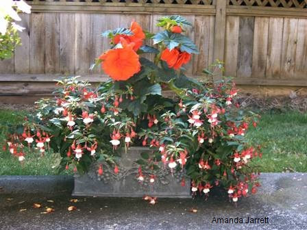 May gardens,May flowers,May garden chores,pruning,bedding plants,annuals,planting plants,soil improvement,fertilizers,houseplants,tropical plants,vegetable gardening,companion planting,succession planting,crop rotation,mulch,The Garden Website.com,Amanda's Garden Consulting,Amanda Jarrett
