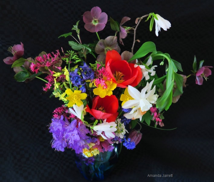 april flowers,april flower arrangements,Amanda Jarrett,spring gardens,spring plants,April gardens,April plants,April flowers,April lawn care,spring lawn care,April garden chores,sowing seeds,the Garden Website.com,Amanda's Garden Consulting