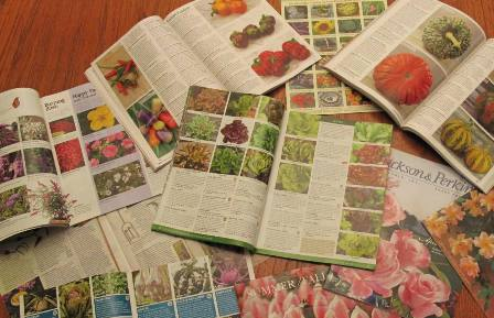 seed catalogues,seed propagation,February  Gardens,February plants,winter gardening,the Garden Website.com,Amanda Jarrett,Amanda's Garden Consulting
