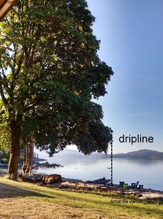 dripline, fertilizing, fertilizers, canopy