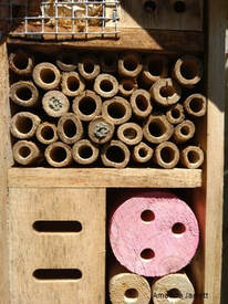 mason bees in winter,organic gardening,November gardening,November plants,The Garden Website.com,The Garden Website,Amanda Jarrett,Amanda's Garden Consulting