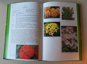 Ornamental Tropical Shrubs book,Amanda Jarrett,the garden website.com,Amanda's Garden Consulting