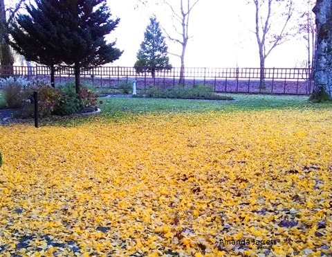 grass clippings,November lawns,lawn renovation,fall lawn care, Amanda Jarrett, the garden website.com,organic gardening