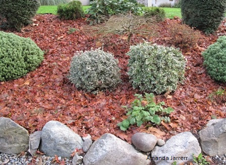 preparing garden beds for winter,organic gardening,November gardening,November plants,The Garden Website.com,The Garden Website,Amanda Jarrett,Amanda's Garden Consulting