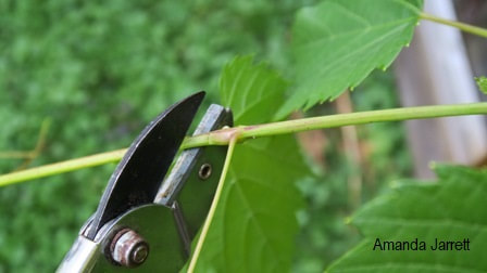 pruning tools,pruning,the garden website.com,thegardenwebsite.com,Amanda Jarrett
