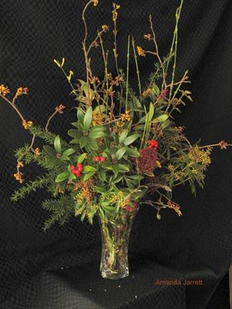 January plants & flowers, Hamamelis mollis, witch hazel, Skimmia japonica,Pieris japonica,lily-of-the-valley shrub,Erica carnea, winter heather,Euonymus fortunei 'Emerald n' Gold', wintercreeper,Tsuga heterophylla, western hemlock, Jasminum nudiflorum, winter jasmine