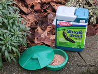 snail & slug control,mollusks,November gardening,November plants,The Garden Website.com,The Garden Website,Amanda Jarrett,Amanda's Garden Consulting