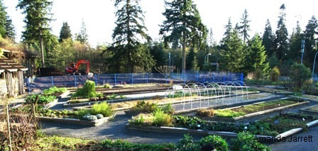 UBC,May gardens,May flowers,May garden chores,pruning,bedding plants,annuals,planting plants,soil improvement,fertilizers,houseplants,tropical plants,vegetable gardening,companion planting,succession planting,crop rotation,mulch,The Garden Website.com,Amanda's Garden Consulting,Amanda Jarrett